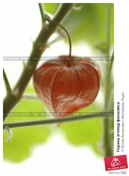 Купить «Герань и плод физалиса», фото № 968, снято 25 февраля 2006 г. (c) Юлия Яковлева / Фотобанк Лори