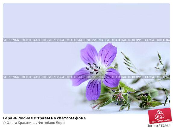 Герань лесная и травы на светлом фоне, фото № 13964, снято 1 июля 2006 г. (c) Ольга Красавина / Фотобанк Лори