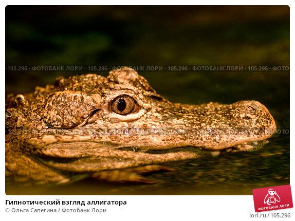 Купить «Гипнотический взгляд аллигатора», фото № 105296, снято 24 апреля 2018 г. (c) Ольга Сапегина / Фотобанк Лори