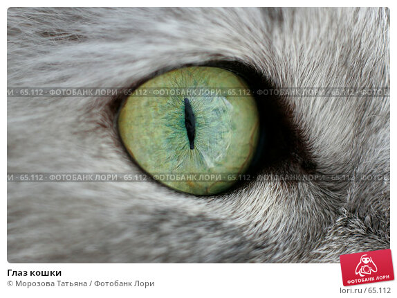 Глаз кошки, фото № 65112, снято 25 июня 2006 г. (c) Морозова Татьяна / Фотобанк Лори