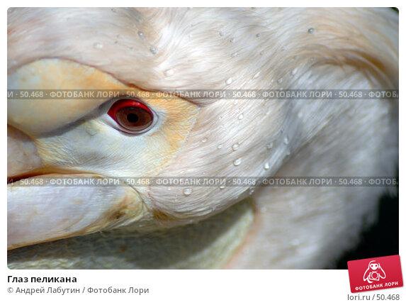 Купить «Глаз пеликана», фото № 50468, снято 20 мая 2007 г. (c) Андрей Лабутин / Фотобанк Лори