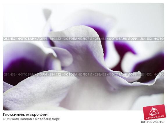 Глоксиния, макро фон, фото № 284432, снято 3 мая 2008 г. (c) Михаил Павлов / Фотобанк Лори