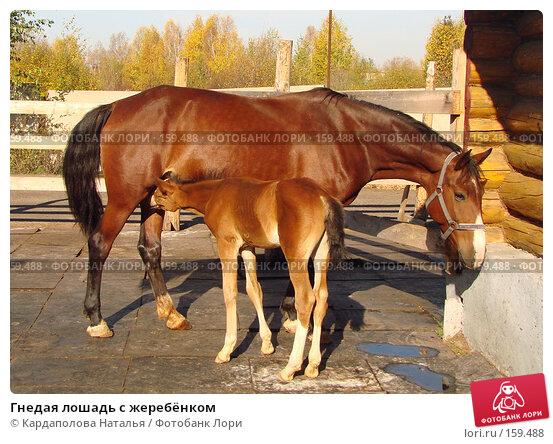 Гнедая лошадь с жеребёнком, фото № 159488, снято 4 октября 2007 г. (c) Кардаполова Наталья / Фотобанк Лори