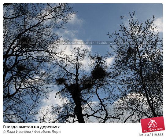 Гнезда аистов на деревьях, фото № 119868, снято 5 апреля 2007 г. (c) Лада Иванова / Фотобанк Лори