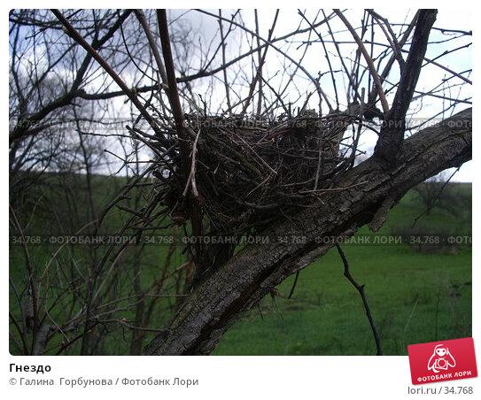 Гнездо, фото № 34768, снято 19 апреля 2006 г. (c) Галина  Горбунова / Фотобанк Лори