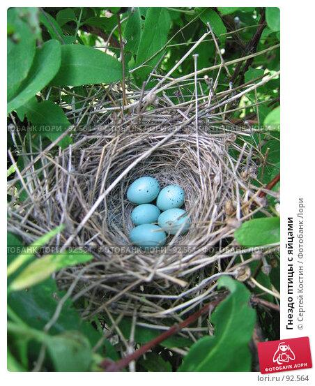 Гнездо птицы с яйцами, фото № 92564, снято 18 июня 2007 г. (c) Сергей Костин / Фотобанк Лори