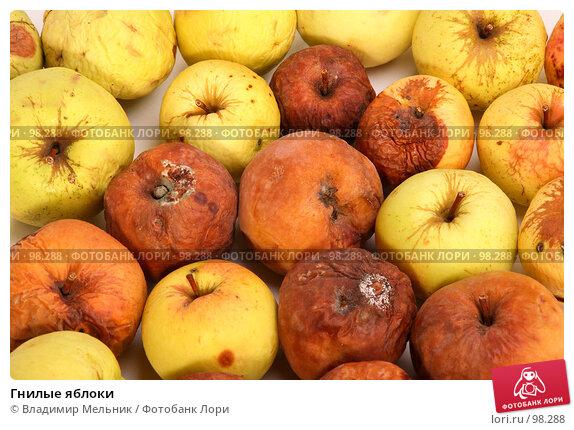 Гнилые яблоки, фото № 98288, снято 11 октября 2007 г. (c) Владимир Мельник / Фотобанк Лори