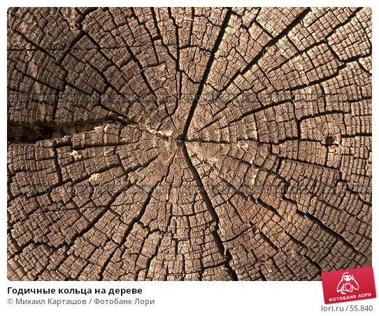 Годичные кольца на дереве, эксклюзивное фото № 55840, снято 27 мая 2007 г. (c) Михаил Карташов / Фотобанк Лори
