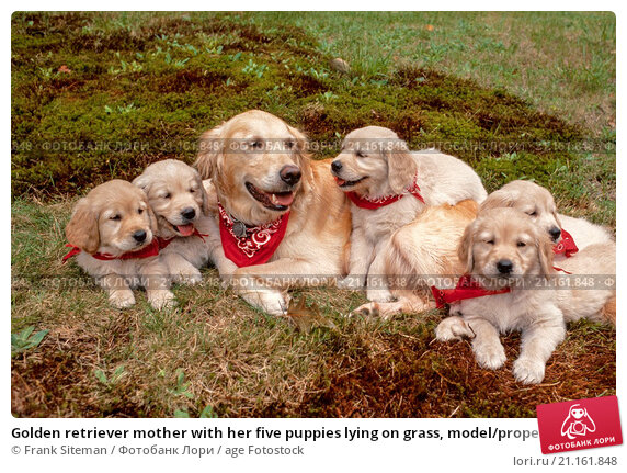 the dog and her five puppies summary Five puppies cloned from dead pit bull an american woman received five puppies tuesday that were cloned from her dog pulled her.