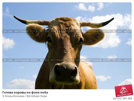 Голова коровы на фоне неба, фото № 301304, снято 27 мая 2008 г. (c) Елена Блохина / Фотобанк Лори