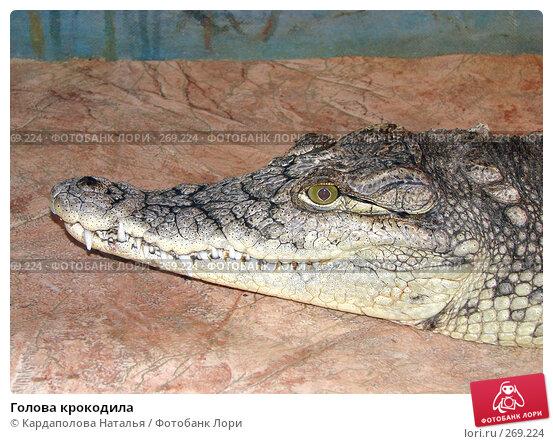 Голова крокодила, фото № 269224, снято 1 мая 2008 г. (c) Кардаполова Наталья / Фотобанк Лори