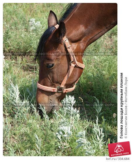 Купить «Голова лошади крупным планом», фото № 334684, снято 14 декабря 2017 г. (c) Константин Босов / Фотобанк Лори