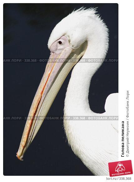 Голова пеликана, эксклюзивное фото № 338368, снято 12 июня 2007 г. (c) Дмитрий Нейман / Фотобанк Лори