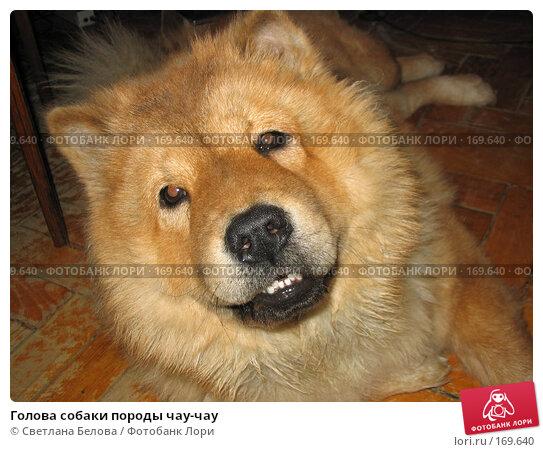 Голова собаки породы чау-чау, фото № 169640, снято 11 февраля 2004 г. (c) Светлана Белова / Фотобанк Лори