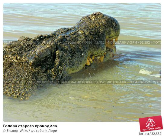 Голова старого крокодила, фото № 32352, снято 21 июня 2006 г. (c) Eleanor Wilks / Фотобанк Лори