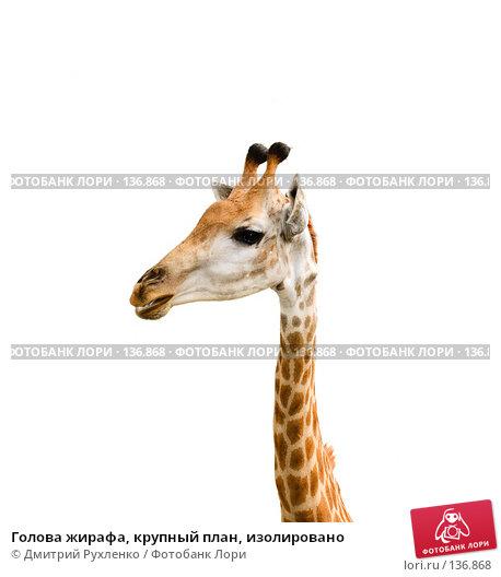 Голова жирафа, крупный план, изолировано, фото № 136868, снято 14 сентября 2007 г. (c) Дмитрий Рухленко / Фотобанк Лори