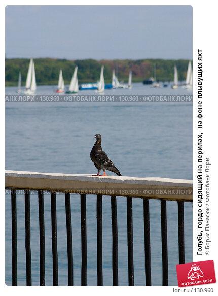 Голубь, гордо сидящий на перилах,  на фоне плывущих яхт, фото № 130960, снято 31 августа 2007 г. (c) Борис Панасюк / Фотобанк Лори