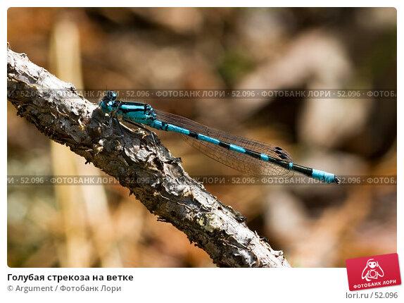 Голубая стрекоза на ветке, фото № 52096, снято 16 июля 2006 г. (c) Argument / Фотобанк Лори