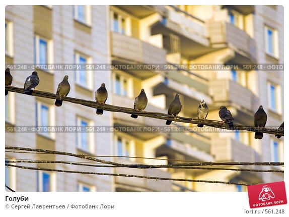 Голуби, фото № 561248, снято 13 ноября 2008 г. (c) Сергей Лаврентьев / Фотобанк Лори