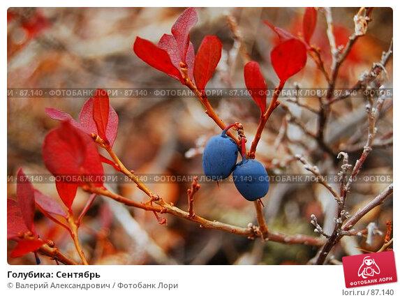 Голубика: Сентябрь, фото № 87140, снято 31 марта 2017 г. (c) Валерий Александрович / Фотобанк Лори