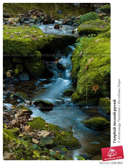 Голубой лесной ручей, фото № 246864, снято 31 октября 2007 г. (c) Александр Телеснюк / Фотобанк Лори