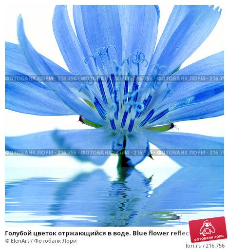 Голубой цветок отржающийся в воде. Blue flower reflected in water, фото № 216756, снято 20 августа 2017 г. (c) ElenArt / Фотобанк Лори