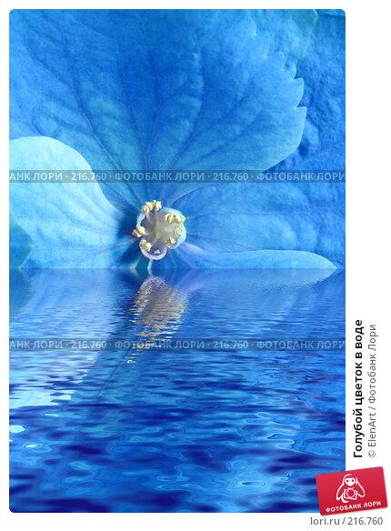 Купить «Голубой цветок в воде», фото № 216760, снято 20 апреля 2018 г. (c) ElenArt / Фотобанк Лори