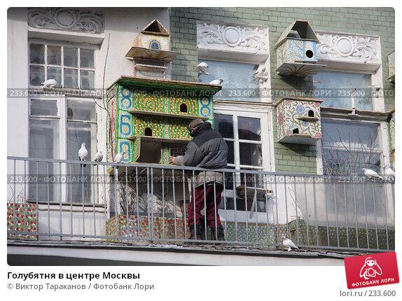 Купить «Голубятня в центре Москвы», эксклюзивное фото № 233600, снято 22 марта 2008 г. (c) Виктор Тараканов / Фотобанк Лори