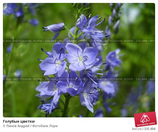 Голубые цветки, фото № 335484, снято 1 января 2006 г. (c) Панов Андрей / Фотобанк Лори