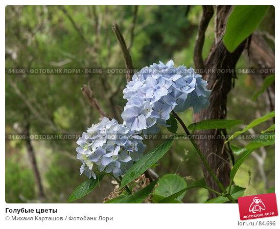 Голубые цветы, эксклюзивное фото № 84696, снято 2 августа 2007 г. (c) Михаил Карташов / Фотобанк Лори