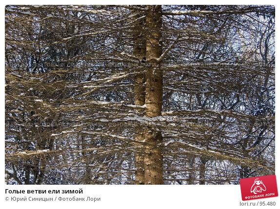 Голые ветви ели зимой, фото № 95480, снято 27 января 2007 г. (c) Юрий Синицын / Фотобанк Лори