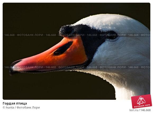 Купить «Гордая птица», фото № 146668, снято 4 сентября 2004 г. (c) hunta / Фотобанк Лори