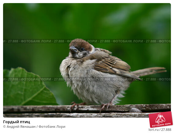 Гордый птиц, фото № 27888, снято 16 августа 2006 г. (c) Андрей Явнашан / Фотобанк Лори