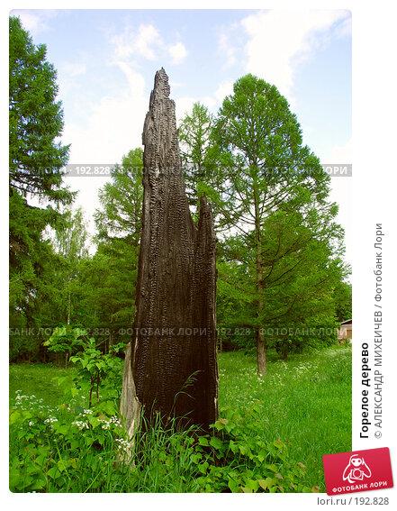 Горелое дерево, фото № 192828, снято 17 июня 2006 г. (c) АЛЕКСАНДР МИХЕИЧЕВ / Фотобанк Лори