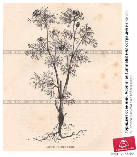 """Горицвет осенний, Adonis (autumnalis) иллюстрация из книги """"Flowers of the field"""", издано в Лондоне в 1888, иллюстрация № 133488 (c) Tamara Kulikova / Фотобанк Лори"""