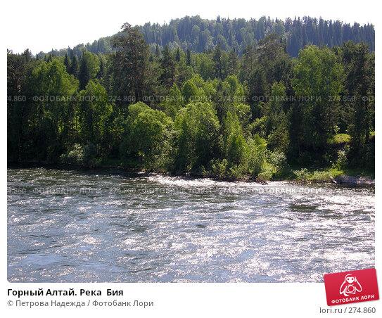 Горный Алтай. Река  Бия, фото № 274860, снято 22 июня 2006 г. (c) Петрова Надежда / Фотобанк Лори