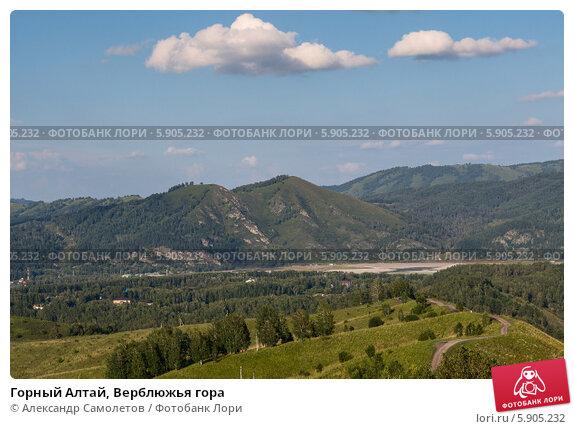 Купить «Горный Алтай, Верблюжья гора», фото № 5905232, снято 21 августа 2013 г. (c) Александр Самолетов / Фотобанк Лори