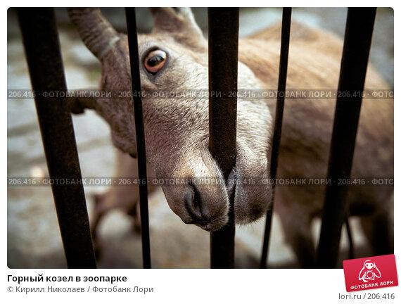 Купить «Горный козел в зоопарке», фото № 206416, снято 22 апреля 2018 г. (c) Кирилл Николаев / Фотобанк Лори