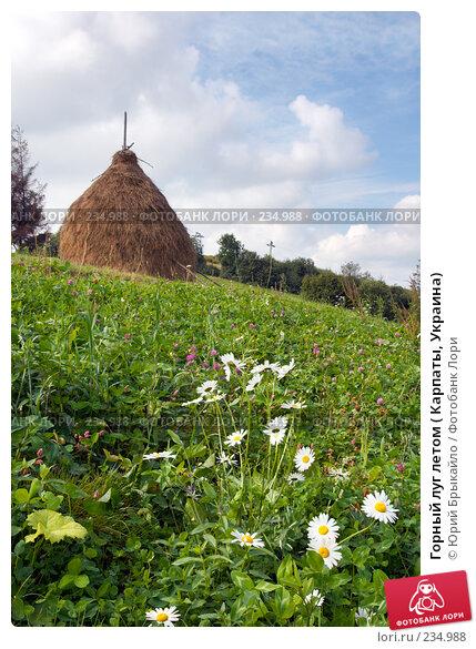 Горный луг летом ( Карпаты, Украина), фото № 234988, снято 2 сентября 2007 г. (c) Юрий Брыкайло / Фотобанк Лори