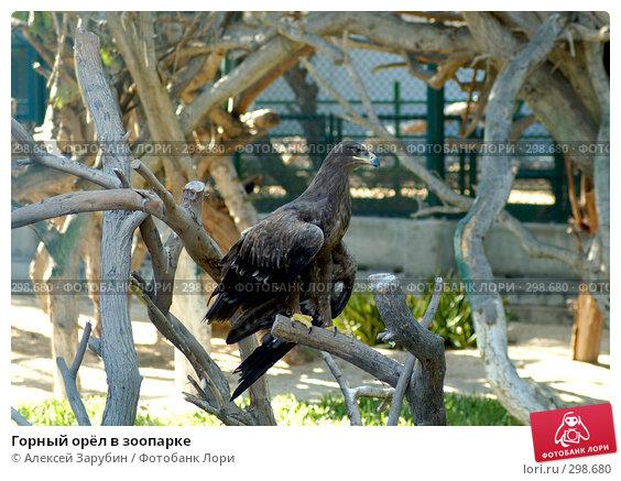 Купить «Горный орёл в зоопарке», фото № 298680, снято 16 ноября 2007 г. (c) Алексей Зарубин / Фотобанк Лори