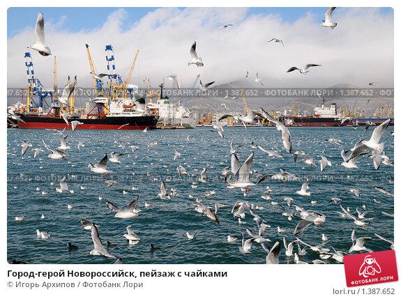 Купить «Город-герой Новороссийск, пейзаж с чайками», фото № 1387652, снято 17 января 2010 г. (c) Игорь Архипов / Фотобанк Лори