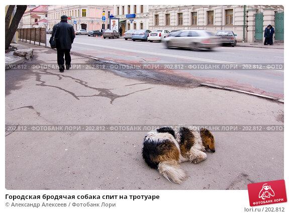 Городская бродячая собака спит на тротуаре, эксклюзивное фото № 202812, снято 11 февраля 2008 г. (c) Александр Алексеев / Фотобанк Лори