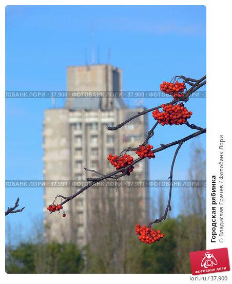 Городская рябинка, фото № 37900, снято 29 октября 2006 г. (c) Владислав Грачев / Фотобанк Лори