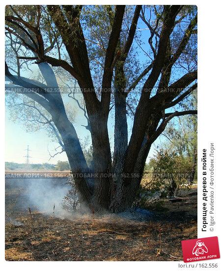 Горящее дерево в пойме, фото № 162556, снято 22 июля 2006 г. (c) Igor Pavlenko / Фотобанк Лори