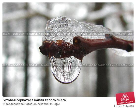 Купить «Готовая сорваться капля талого снега», фото № 114028, снято 5 ноября 2007 г. (c) Кардаполова Наталья / Фотобанк Лори
