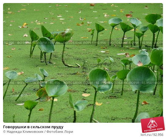 Говорушки в сельском пруду, фото № 92956, снято 22 сентября 2007 г. (c) Надежда Климовских / Фотобанк Лори
