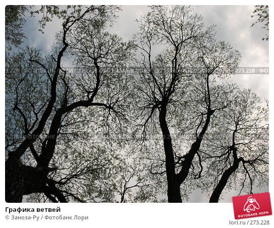 Графика ветвей, фото № 273228, снято 1 мая 2008 г. (c) Заноза-Ру / Фотобанк Лори
