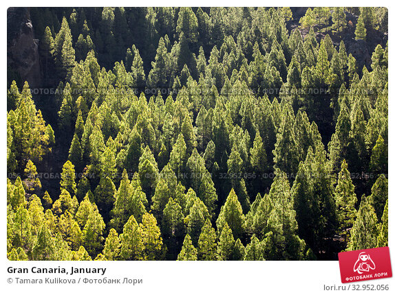Gran Canaria, January (2020 год). Стоковое фото, фотограф Tamara Kulikova / Фотобанк Лори