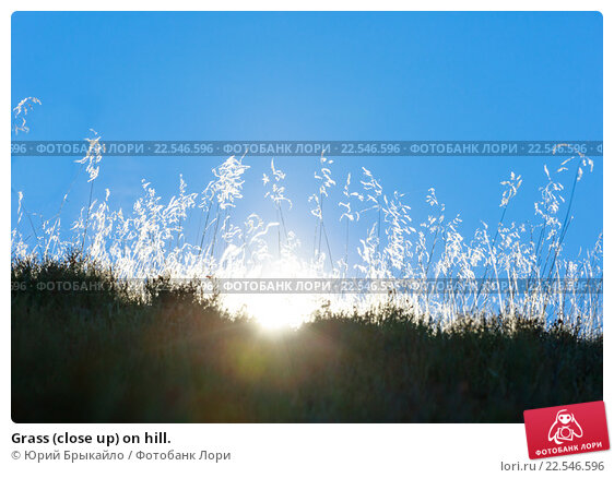 Купить «Grass (close up) on hill.», фото № 22546596, снято 4 ноября 2015 г. (c) Юрий Брыкайло / Фотобанк Лори