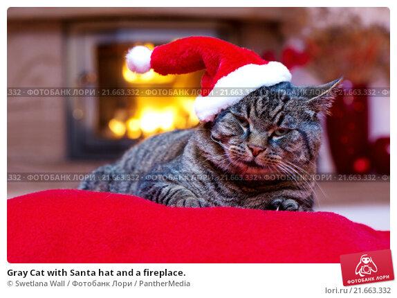 Купить «Gray Cat with Santa hat and a fireplace.», фото № 21663332, снято 23 июля 2019 г. (c) PantherMedia / Фотобанк Лори